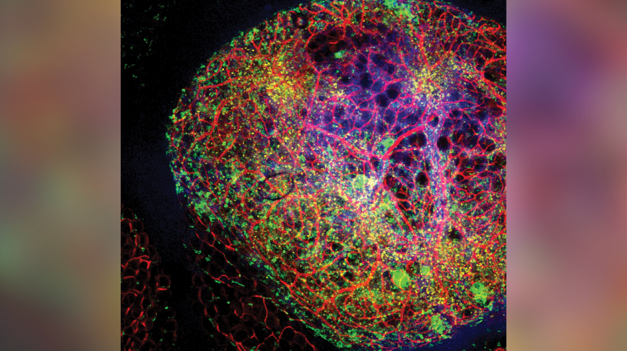 A colorful picture of a cell and its blood vessels.