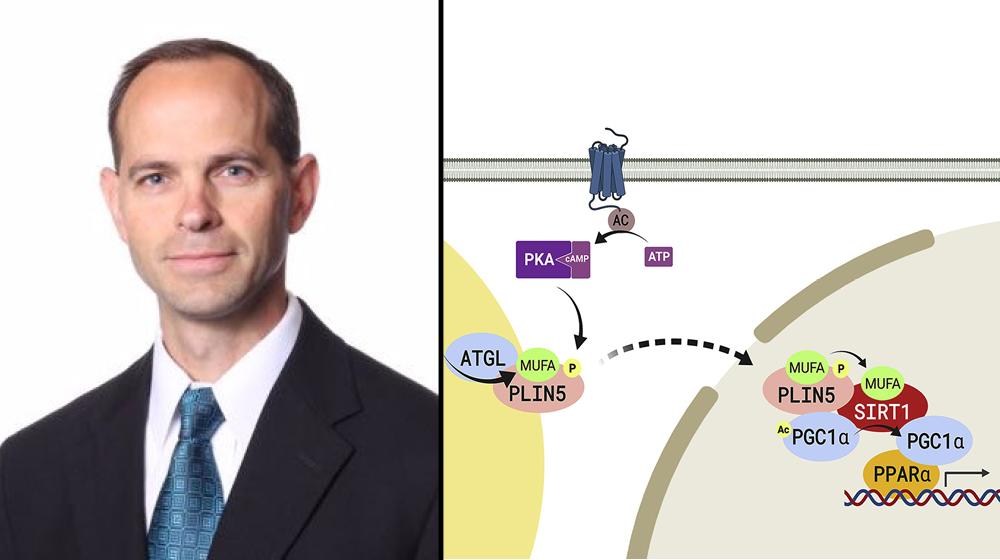 Doug Mashek, PhD