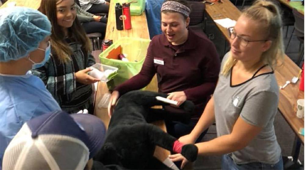 Students practicing veterinary skills