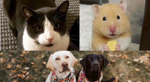 Images of some of the residents' pets