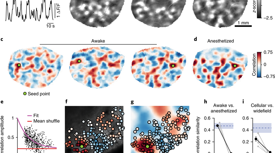 Correlated spontaneous activity in awake ferret visual cortex reveals large-scale modular distributed functional networks.