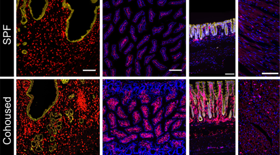A graph showing various up-close images of tissues in multiple colors.