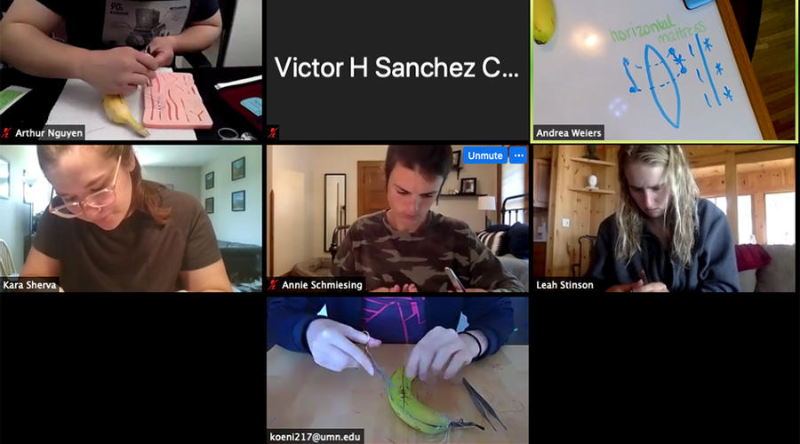 A group of people on Zoom working on suturing a piece of fruit