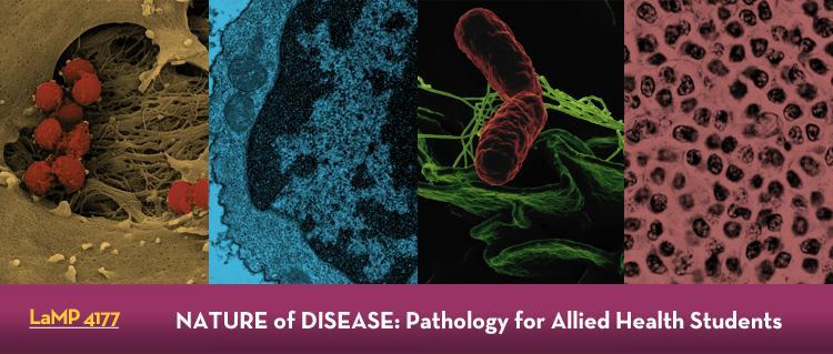 Online Pathology Course for Non-MDs | Medical School